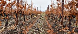 Rockgarden Voneyard Is Latest Acquisition of The Walls Vineyards in Walla Walla