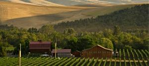 Vineyard and winery of Walla Walla Vintners nestled in picturesque rolling hills