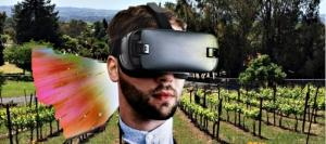 360 Virtual Vineyard Tour