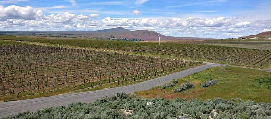Kiona Vineyards have long tenancy in the Red Mountain AVA