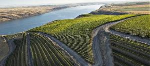 Vineyards overlooking the Columbia in Eastern Washington