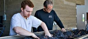 Research at WSU Tri Cities improves quality of the fruit and the Washington wines made from it